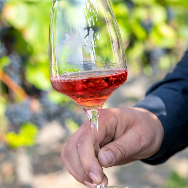 Wolkenberg Wein